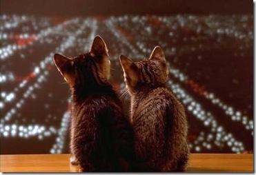 gatos-enamorados1